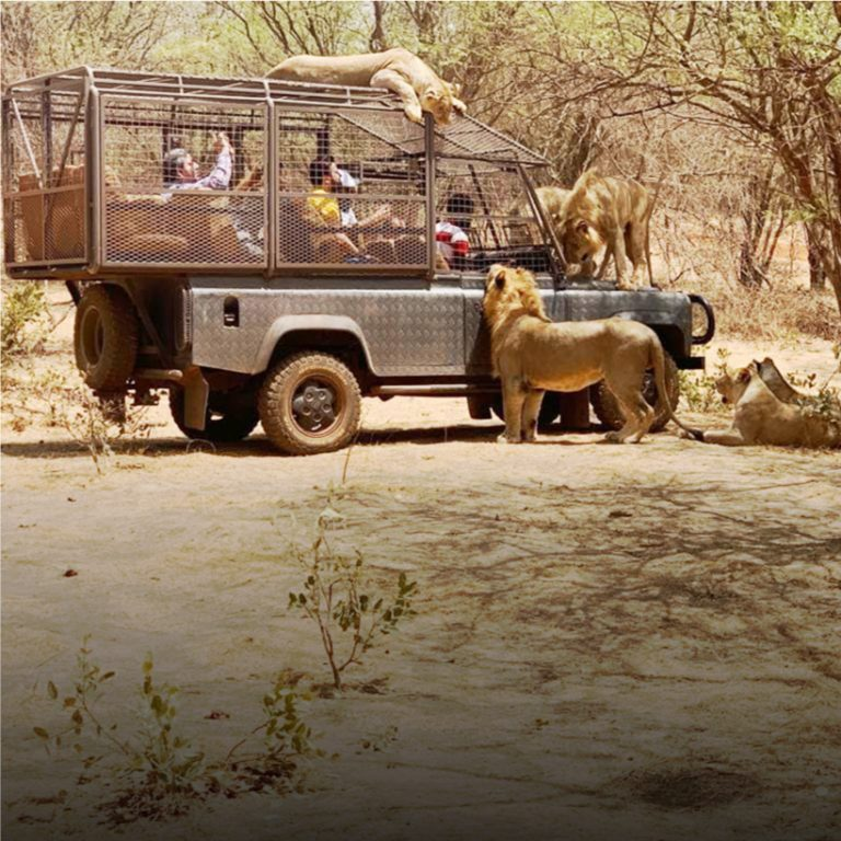 Africa-Ranch-ats-excursion